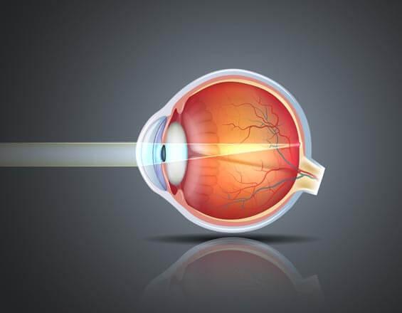 Mécanisme de la vision